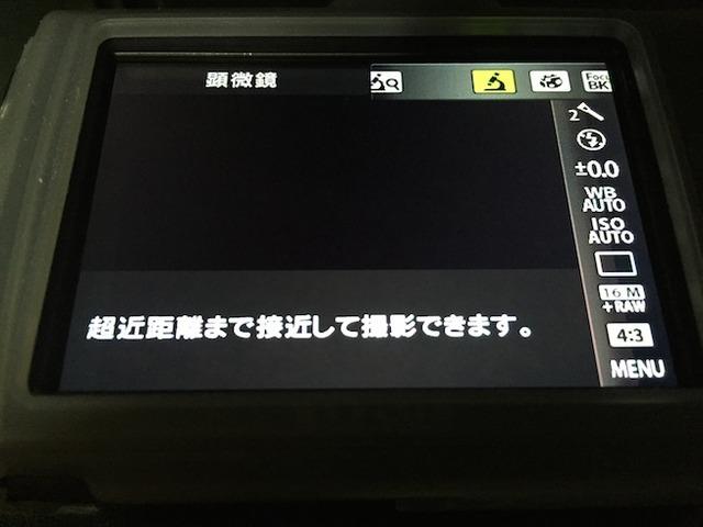 IMG_8089